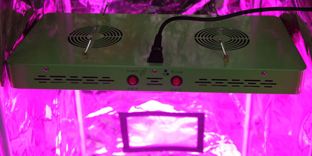 Switchable 480 LED Grow Light In Action
